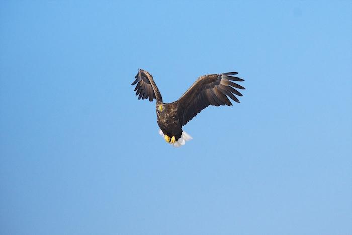 鳥の眼で見る(俯瞰する)
