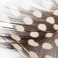 ジナンとキメラの翼のオハナシ